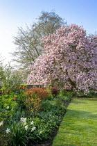 Magnolia x soulangeana, Fritillaria imperialis