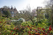 Kitchen garden, Chaenomeles speciosa hedge