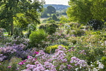 Rosa 'Ballerina', view across rose garden to rose pergola