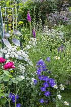 Cottage garden, Rosa 'Guirlande d'Amour' (Lens), foxgloves, campanula, Marguerites, kitchen utensils, Rosa glauca, Gillenia trifoliata