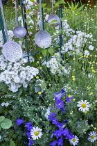 Argyranthemum frutescens, Rosa 'Guirlande d'Amour' (Lens) and old kitchen utensils, campanula