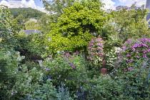 Rusty metal sculpture by Frank Maas in rose garden, Rosa 'Thalia', Rosa 'Hugo Maweroff' (Soupert & Notting 1910), Rosa 'Ghislaine de Féligonde', liquidambar, Rosa 'Alchymist' climbing in apple tree