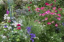 Cottage garden, Rosa 'Guirlande d'Amour' (Lens), Rosa 'Bukavu', foxgloves, campanula, Marguerites, kitchen utensils