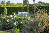 Peonies in potager by white painted bench