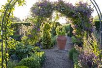 Rosa 'Veilchenblau' climbing over arch in formal kitchen garden, large terracotta pot, Buxus sempervirens, apples, potatoes