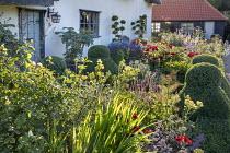 Cottage garden border, clipped box topiary, Echinops ritro, roses, eryngium, thalictrum, salvia, Nepeta 'Six Hills Giant'