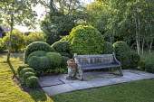 Wooden bench on stone patio, cloud-pruned Buxus sempervirens and ivy hedge