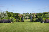 View across lawn to wrought-iron metal gates in yew hedge, sedum, geranium, persicaria, Rosa 'Sir Paul Smith'
