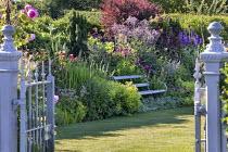 Bench in cottage garden border, thalictrum, Stachys byzantina, Alchemilla mollis, roses, cotinus, delphinium, astrantia