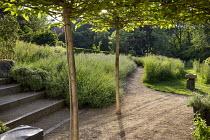 Umbrella trained mulberry trees above gravel terrace, lavender, steps, bird bath by Sarah Walton