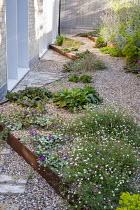 Cor-Ten steel step in gravel garden, Erigeron karvinskianus, Lamium maculatum 'Beacon Silver', side passage