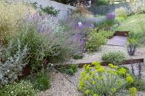 Gravel garden, Euphorbia seguieriana subsp. niciciana, Deschampsia cespitosa 'Goldschleier', Salvia nemorosa 'Amethyst', Zizia aurea, Lychnis coronaria, Erigeron karvinskianus
