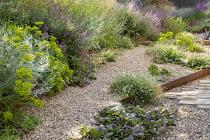 Gravel garden, Euphorbia seguieriana subsp. niciciana, Salvia nemorosa 'Amethyst', Erigeron karvinskianus, Ajuga reptans 'Catlin's Giant'