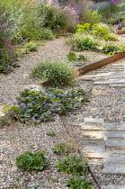 Cor-Ten steel step in gravel garden, Erigeron karvinskianus, Saxifraga umbrosa, Ajuga reptans 'Catlin's Giant'