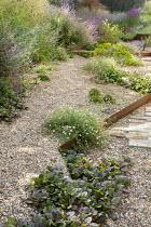 Cor-Ten steel step in gravel garden, Erigeron karvinskianus, Saxifraga umbrosa, Euphorbia seguieriana subsp. niciciana, Salvia nemorosa 'Amethyst', Ajuga reptans 'Catlin's Giant'