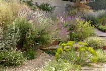 Gravel garden, Cor-Ten steel step, Euphorbia seguieriana subsp. niciciana, Erigeron karvinskianus, Salvia nemorosa 'Amethyst', Zizia aurea, Lychnis coronaria