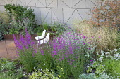 White chairs on contemporary steel patio, Lychnis coronaria, Lythrum virgatum 'Rosy Gem', Deschampsia cespitosa 'Goldschleier', Amelanchier lamarckii, contemporary fence, Geranium 'Lilac Ice', Astrant...
