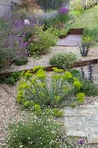 Cor-Ten steel step in gravel garden, Erigeron karvinskianus, Euphorbia seguieriana subsp. niciciana, Salvia nemorosa 'Amethyst', Zizia aurea, Sedum 'Jose Aubergine'
