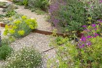 Gravel garden, Geranium 'Patricia', Zizia aurea, Euphorbia seguieriana subsp. niciciana, Salvia nemorosa 'Amethyst', Erigeron karvinskianus, Lychnis coronaria