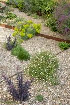 Gravel garden, Sedum 'Jose Aubergine', Euphorbia seguieriana subsp. niciciana, Salvia nemorosa 'Amethyst', Erigeron karvinskianus