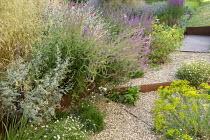 Gravel garden, Armeria maritima, Euphorbia seguieriana subsp. niciciana, Salvia nemorosa 'Amethyst', Deschampsia cespitosa 'Goldschleier'
