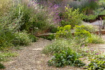 Gravel garden, Cor-Ten steel step, Euphorbia seguieriana subsp. niciciana, Erigeron karvinskianus, Salvia nemorosa 'Amethyst', Zizia aurea, Lychnis coronaria, Ajuga reptans 'Catlin's Giant'