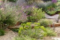 Cor-Ten steel raised bed, Euphorbia seguieriana subsp. niciciana, Erigeron karvinskianus, Salvia nemorosa 'Amethyst', Zizia aurea, Lychnis coronaria