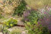 Stipa gigantea, Cor-Ten steel step, Euphorbia seguieriana subsp. niciciana, Erigeron karvinskianus, Salvia nemorosa 'Amethyst', Zizia aurea, Lychnis coronaria