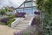 Stone steps leading to house, clipped Buxus sempervirens balls, salvia, perovskia