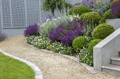 Clipped Buxus sempervirens balls in sloping border, salvia, perovskia, roses, osteospermum, curving gravel path