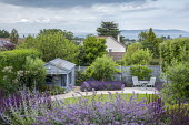 Curving gravel path around lawn, salvia, blue painted summerhouse, olive tree underplanted with lavender, table and chairs