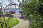 Curving gravel path leading to house, stone steps, clipped Buxus sempervirens balls, salvia, perovskia, Olea europaea, thalictrum