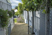 Side passage, gravel path, pale blue painted fence, pleached trees, osteospermums, table and chairs