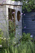 Wooden playhouse, Verbena bonariensis, dark painted fence, rosemary, ferns