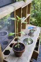 Seedling in terracotta pot on wooden kitchen shelf