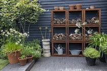 Metal wood storage shelving system, watering can, alliums, agapanthus, Amelanchier lamarckii