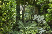 Mirror against fence in shady border, Fatsia japonica 'Spider's Web', ferns, Brunnera macrophylla 'Jack Frost', euonymus