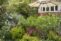 Nerium oleander, Agastache 'Blackadder', Alchemilla mollis, Rosa 'Alba Maxima', euphorbia, Lavatera x clementii 'Barnsley Baby', Ammi majus, umbrella