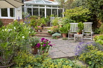 Wooden chairs on patio, Nerium oleander, Agastache 'Blackadder', Alchemilla mollis, lavender, umbrella, Regal Pelargonium 'Burghi'
