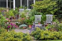Wooden chairs on patio, Alchemilla mollis, lavender, umbrella, Regal Pelargonium 'Burghi', tender plants, viburnum