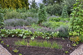 Rows of Spring onion and beetroot in kitchen garden