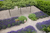 Petanque pitch under umbrella-trained Malus sylvestris, Lavandula angustifolia 'Hidcote', Salvia officinalis, self-binding gravel, white metal chair