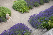 Lavandula angustifolia 'Hidcote', Salvia officinalis, self-binding gravel, white metal chair