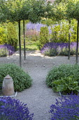 Umbrella-trained Malus sylvestris, Lavandula angustifolia 'Hidcote', Salvia officinalis, self-binding gravel, petanque pitch