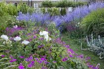 Geranium 'Patricia', Perovskia atriplicifolia 'Blue Spire', Romneya coulteri, Miscanthus sinensis 'Flamingo', Dianthus carthusianorum, grass path