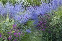 Perovskia atriplicifolia 'Blue Spire', Geranium 'Patricia', Dianthus carthusianorum, grass path