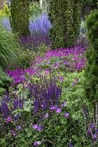 Geranium 'Patricia', Hylotelephium spectabile (Brilliant Group) 'Brilliant' syn. sedum, Salvia nemorosa 'Ostfriesland', Taxus baccata 'Fastigiata', Perovskia atriplicifolia 'Blue Spire'