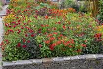 Alstroemeria 'Red Elf', Monarda 'Jacob Cline', dahlia seedlings