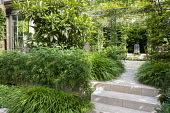 Stone path and steps leading to pool and fountain, Hakonechloa macra, choisya, Eriobotrya japonica