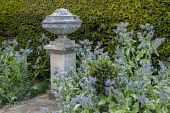 Stone ornament by yew hedge, Borago officinalis